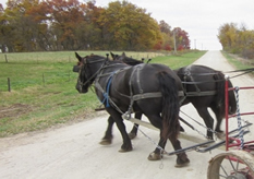 horse_drawn_wagon (800x675) (640x540) (400x338)